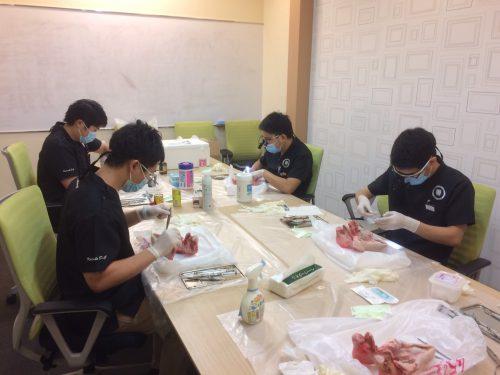 豚実習 カツベ歯科クリニック-1
